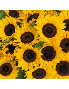 Servilletas de papel decoradas girasoles 33 x 33 cm