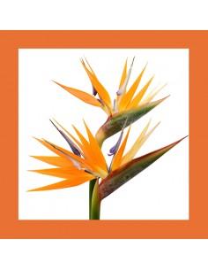 Servilletas de papel decoradas color naranja 33 x 33 cm